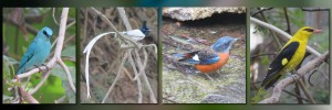 slide-birdsofiisc